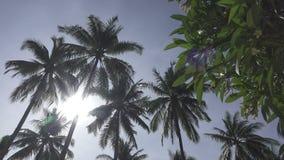 Vista panorâmica de baixo das partes superiores das palmeiras na perspectiva do céu azul solnetsny no recurso tropical vídeos de arquivo