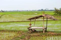 Vista panorâmica de campos do arroz Imagem de Stock Royalty Free