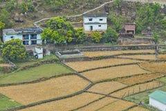 Vista panorâmica de campos de trigo em uma vila indiana imagem de stock royalty free