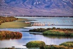 Vista panorâmica de pantanais de Cabo de Gata com os flamingos cor-de-rosa no fundo foto de stock royalty free