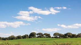 Vista panor?mica de um bosque do carvalho em um campo de grama verde, sob um c?u azul imagem de stock