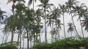 Vista panorâmica de uma palmeira o mar e a associação em tropical o recurso de Bali Indonésia video estoque