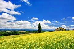 Vista panorâmica do campo da mostarda e do céu azul com as nuvens na cidade de Biei, Hokkaido fotografia de stock