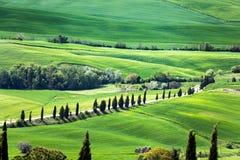 Vista panorâmica do campo típico de Toscânia com cipreste e prado, província de Siena, Itália fotos de stock royalty free