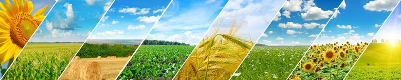 Vista panorâmica do campo verde e do céu azul com nuvens claras fotografia de stock