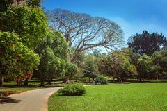 Vista panorâmica do rei botânico real Gardens, Peradeniya, Sri Lanka imagens de stock royalty free