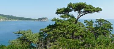 Vista panorâmica dos pinhos nos penhascos litorais na baía azul foto de stock royalty free