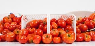 Vista panorâmico dianteira de tomates do campo Imagens de Stock