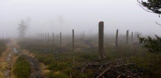 Vista panorâmico do parque cerc na floresta Foto de Stock
