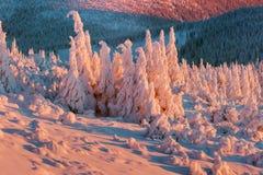 Vista panor Cena exterior colorida, Natal imagens de stock
