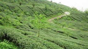 Vista panor?mica de campos do ch? em Taiwan Planta??es de ch? em Shizhuo, montanhas do montanh?s de Alishan vídeos de arquivo