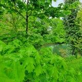 Vista panor?mica do cen?rio bonito nos cumes com lago claro, prado verde, flores de floresc?ncia, fotografia de stock royalty free