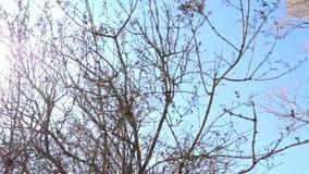 Vista panoramica dei rami di albero sfrondati nudi contro il cielo blu e la venuta d'abbaglio dei raggi del sole di abbagliamento video d archivio