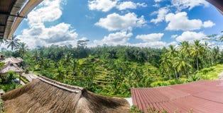 Vista panoramica dei terrazzi del riso di Tegalalang Fotografie Stock Libere da Diritti