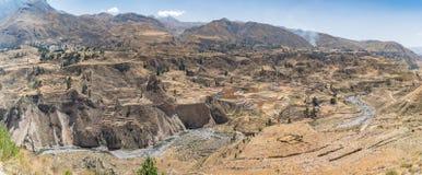 Vista panoramica del canyon di Colca, Perù, Sudamerica con l'agricoltura dei terrazzi Immagine Stock Libera da Diritti