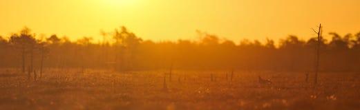 Vista panoramica del gamefield dell'urogallo nero Immagini Stock Libere da Diritti
