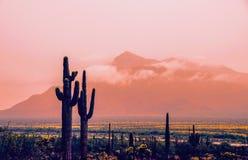 Vista panoramica del giorno piovoso in deserto, primavera, Tucson Arizona fotografie stock
