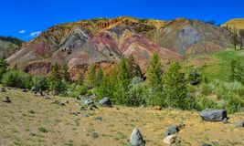 Vista panoramica del paesaggio di estate con la radura sbocciante della foresta Fotografia Stock Libera da Diritti