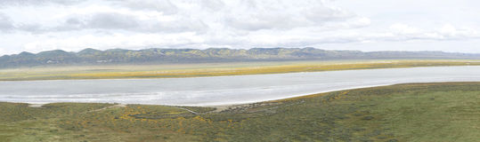 Vista panoramica della fioritura mega normale di Carrizo Immagine Stock Libera da Diritti