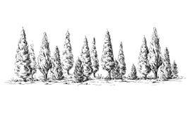 Vista panoramica della foresta dagli alberi di cipresso Immagine Stock