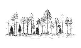 Vista panoramica della foresta dagli alberi differenti Immagine Stock Libera da Diritti