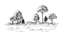 Vista panoramica della foresta dalle conifere Immagini Stock Libere da Diritti