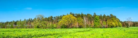 Vista panoramica della foresta selvaggia del pino, vicino a Magdeburgo, la Germania Fotografia Stock