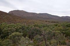 Vista panoramica della libbra con l'oasi del deserto in priorità alta Fotografia Stock Libera da Diritti