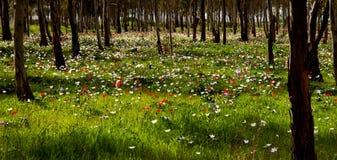 Vista panoramica della natura in Th Immagine Stock