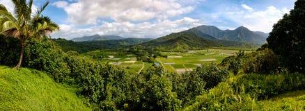 Vista panoramica della valle di Hanalei con i giacimenti e le montagne del taro, Immagini Stock