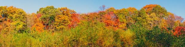 Vista panoramica delle cime variopinte dell'albero nella stagione di autunno fotografia stock libera da diritti