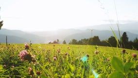 Vista panoramica delle montagne e del prato verde nelle alpi, Austria archivi video