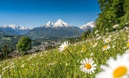 Vista panoramica di bello paesaggio nelle alpi bavaresi con i bei fiori e la montagna famosa di Watzmann Fotografia Stock