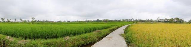 Vista panoramica sui terrazzi esotici del riso in Bali Immagini Stock Libere da Diritti
