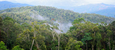 Vista panoramica sulla foresta tropicale dopo pioggia Immagine Stock Libera da Diritti