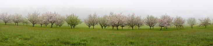 Vista panorâmica com as árvores de fruto de florescência Imagem de Stock Royalty Free
