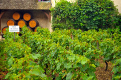 Vista panorâmico de um vinhedo Foto de Stock