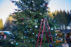 Vista para arriba el árbol de navidad Imágenes de archivo libres de regalías