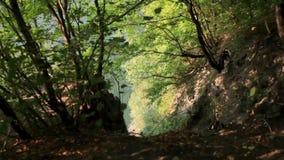 Vista para baixo sobre a inclinação de um hilllside íngreme a um córrego abaixo na floresta video estoque