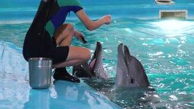 Vista parcial de fluviatilis brancos de alimentação de Sotalia do golfinho do instrutor fêmea video estoque
