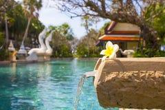 Vista perfeita com piscina da flor do frangipani e da água azul fotografia de stock