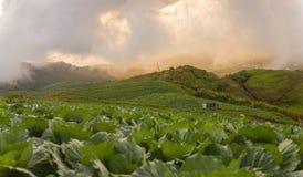 Vista piacevole con la priorità alta del cavolo sull'iceberg della linguetta di Phu Fotografia Stock