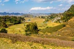 Vista piacevole del plateau di Moc Chau, Vietnam Immagine Stock Libera da Diritti