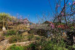 Vista piacevole del plateau di Moc Chau, Vietnam in primavera Fotografie Stock Libere da Diritti