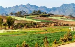 Vista piacevole del plateau di Moc Chau, Vietnam in primavera Immagine Stock