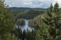 Vista piacevole nel lago della foresta immagine stock libera da diritti