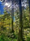 Vista piacevole nella foresta fotografia stock libera da diritti