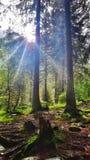 Vista piacevole nella foresta fotografia stock