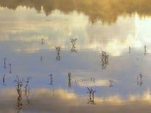 Vista piacevole Piante acquatiche nell'acqua nebbiosa Fotografia Stock Libera da Diritti