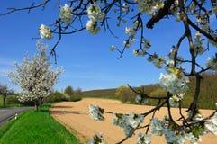Vista pintoresca del campo arado Imagenes de archivo